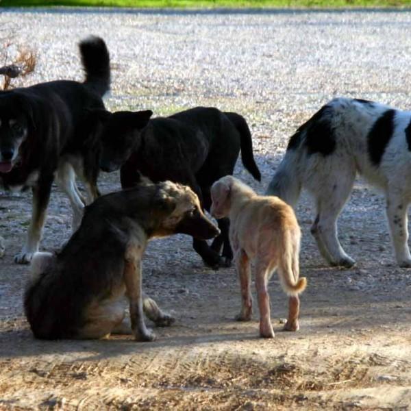 Πέραμα: Επιτρέπεται η σίτιση των αδέσποτων ζώων αλλά πρωινές ώρες