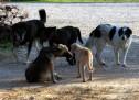 4.000 περίπου τα εγκαταλελειμμένα ζώα στη Σαλαμίνα – Ερώτηση Μπακαδήμα