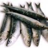 Κατάσχεση αλιευμάτων από το Β' Λιμενικό Τμήμα Κερατσινίου