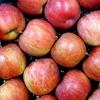 Δεσμεύτηκαν 2,7 τόνοι μήλων στον Πειραιά