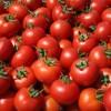 Κατασχέθηκαν τόνοι μουχλιασμένες ντομάτες σε επιχείρηση του Πειραιά
