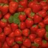 Δέσμευση 1,8 τόνων φράουλας σε επιχείρηση του Πειραιά