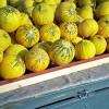 Δέσμευση φρούτων στη λαχαναγορά του Ρέντη