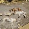 Δολοφόνοι τετράποδων στο Πέραμα