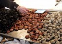 Σαλαμίνα:Κίνδυνος για την υγεία από οστρακοειδή με βαρέα μέταλλα