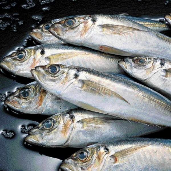 Κατάσχεση ακατάλληλων αλιευμάτων στην Α' λαϊκή αγορά του Πειραιά