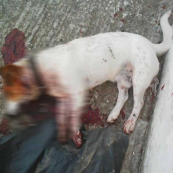 Bρήκαν το σκύλο τους πυροβολημένο στην αυλή του σπιτιού τους στον Πειραιά
