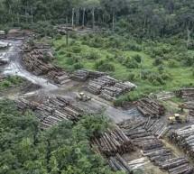 Τετραπλασιάστηκε ο ρυθμός αποψίλωσης δασών στη Βραζιλία