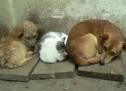 Σήμερα η Διεθνής Ημέρα Αδέσποτων Ζώων