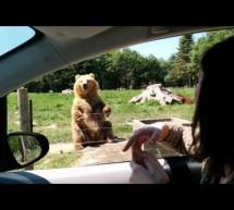 Ενας απίστευτος αρκούδος