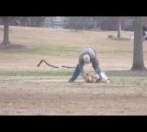 Σκύλος παριστάνει τον νεκρό για να μη φύγει από το πάρκο