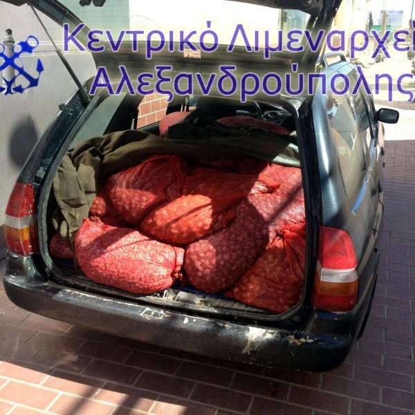Κατάσχεση 1 τόνου ακατάλληλων οστράκων στην Αλεξανδρούπολη