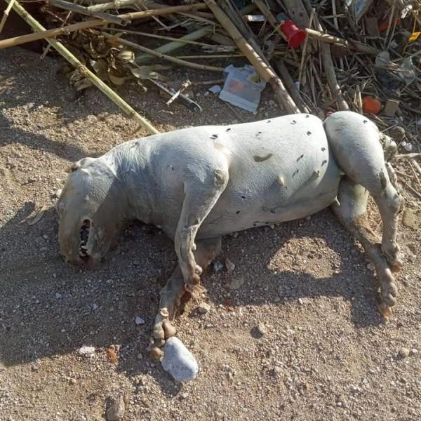 Πλαζ Φρεαττύδας: Eπνιξαν σκυλί δένοντάς το σε σακί με άμμο
